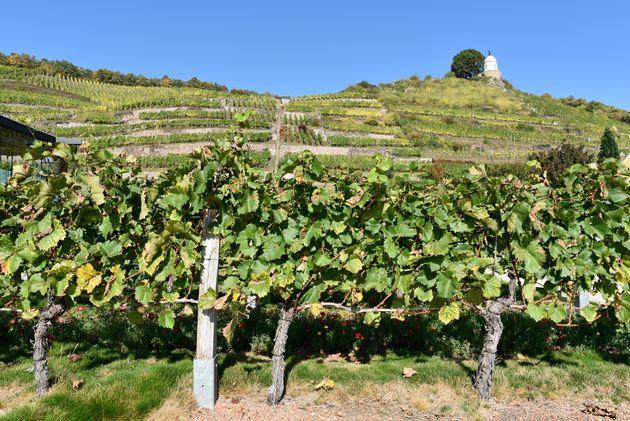 Schloss-Wackerbarth-wijn-1