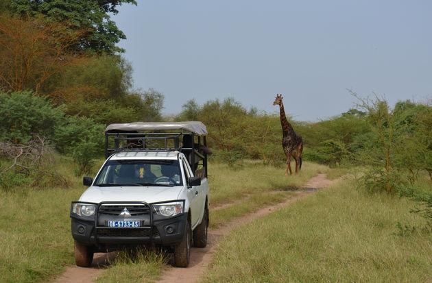 senegal-safari-1