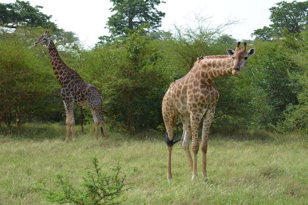 senegal-safari-2