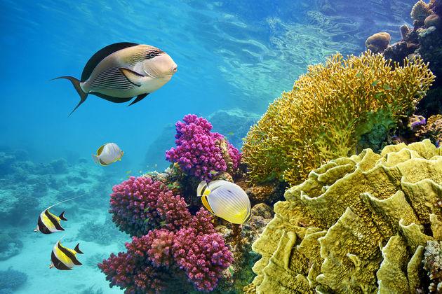 snorkelen-cozumel