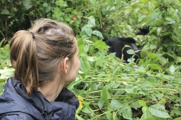 uganda-gorilla's