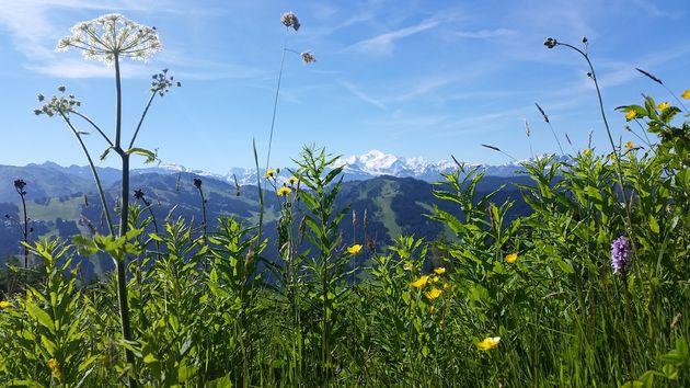 Uitzicht-op-MontBlanc