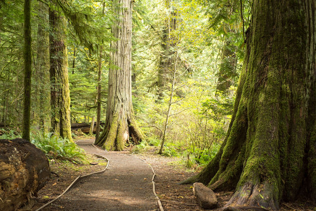 Vancouver_island_nationalpark_bos_wandelen