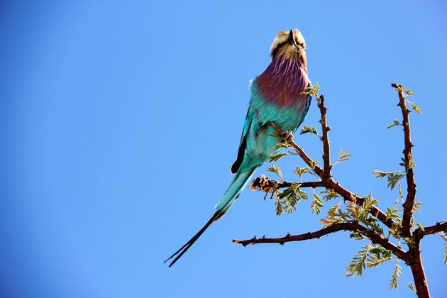 vogel-afrika