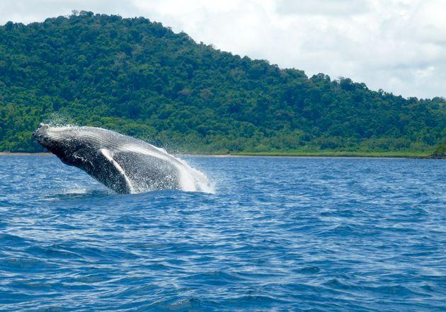 walvis-coiba-panama