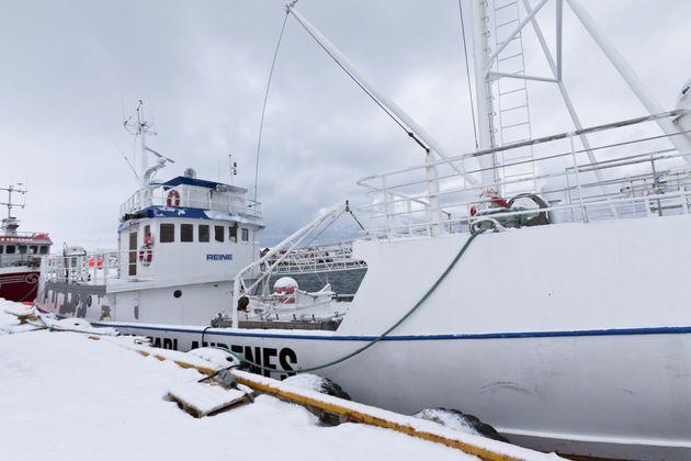 walvissafari-noorwegen