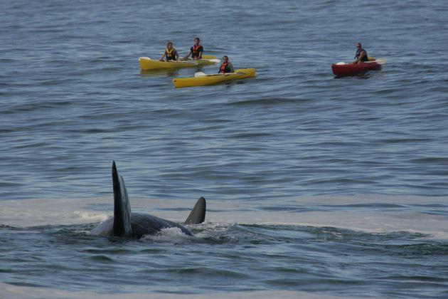 walvissen_spotten_zuid_afrika