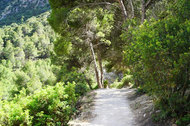 Wandelroute tussen de bomen