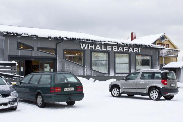 whale-safari-noorwegen