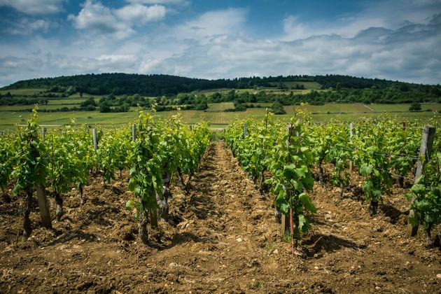wijnvelden-bourgogne