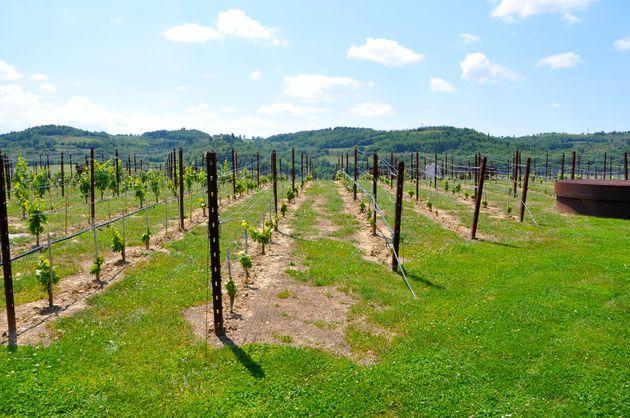 wijnvelden-cantina-antinori