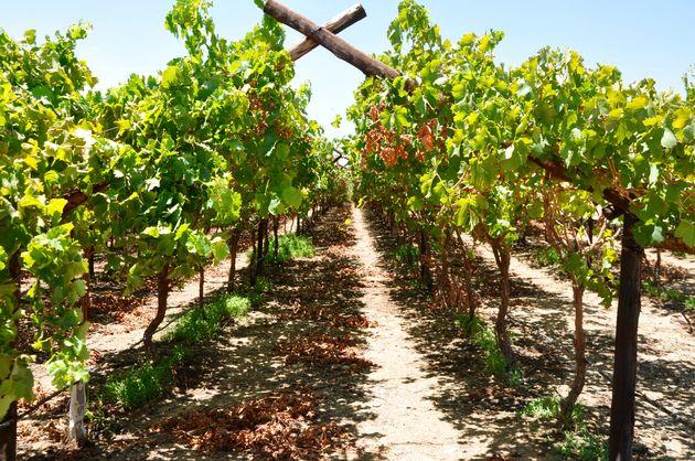 wijnvelden-noord-kaap-zuid-afrika