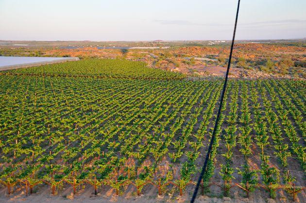 wijnvelden-za