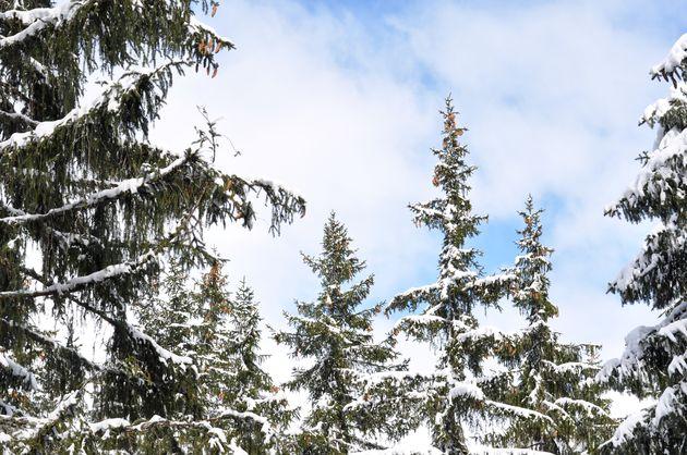 winter-lariskbomen-zon