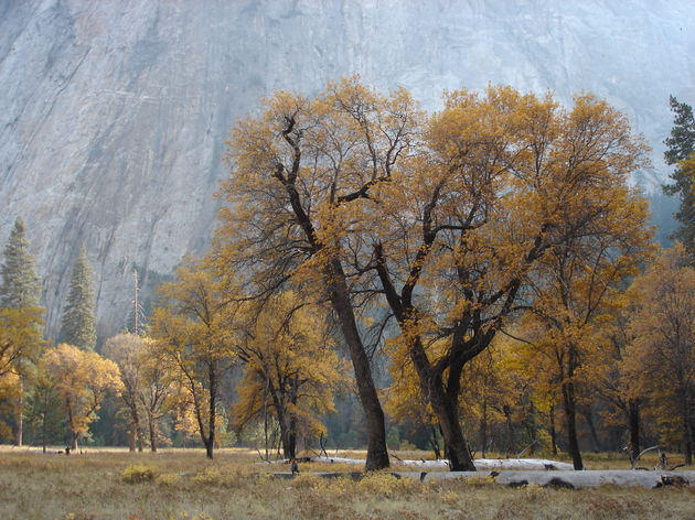 yosemite_national_park_bomen