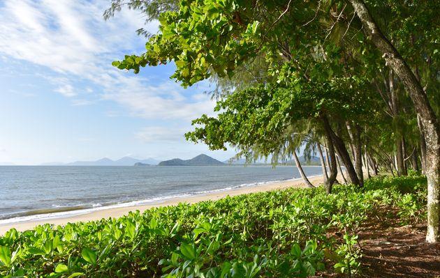 zee-palm-cove