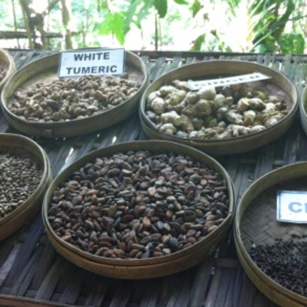 Uitgepoepte koffiebonen met een behoorlijk prijskaartje: Kopi Luwak