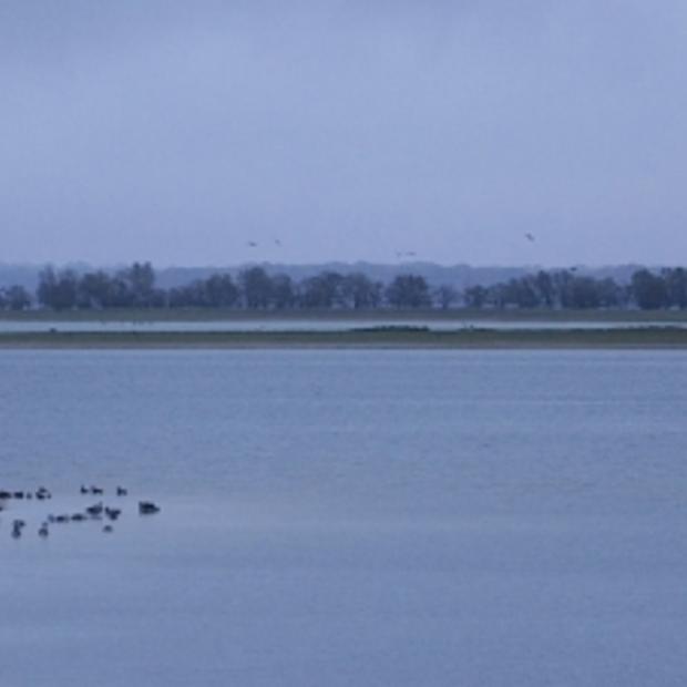 Lac du Der en Champagne, beschermheilige voor Parijs en de natuur op z'n mooist in Montier