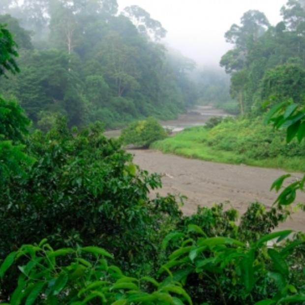 Danum Valley is op Borneo the place to be!
