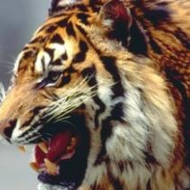Burgers' Zoo verkozen tot leukste dagattractie 2008