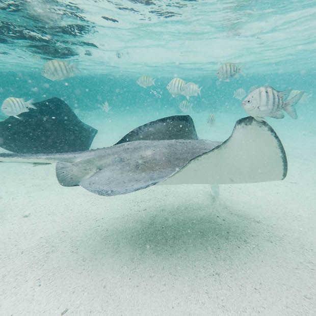 Een onontdekt paradijselijk eiland: Antigua in 21 foto's