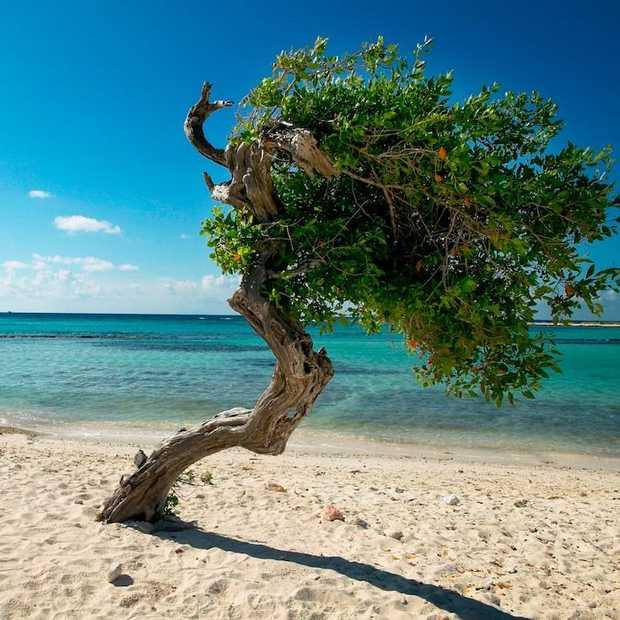 Tip: Aruba Summer Music Festival