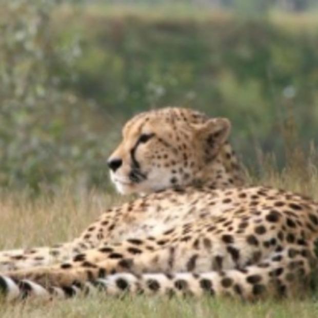 Leuke Facebook game voor Safaripark Beekse Bergen