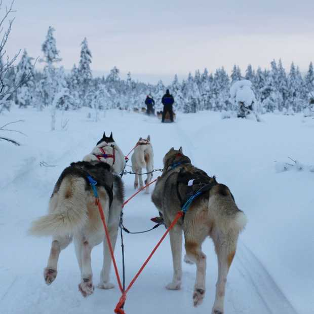 5 unieke winteractiviteiten in Lapland