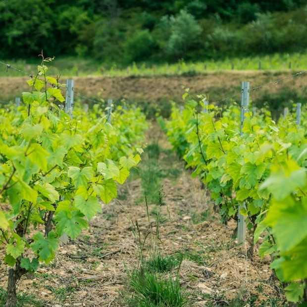 Etrip2014 dag 5: wijn proeven en daarna 'standje turbo' naar boven