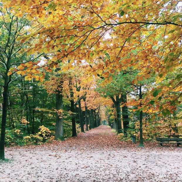 De vijf mooiste plekken voor een herfstwandeling in Nederland