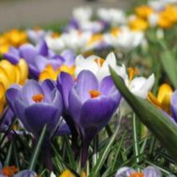 Heerlijk lenteweer op komst: tips voor een dagje weg