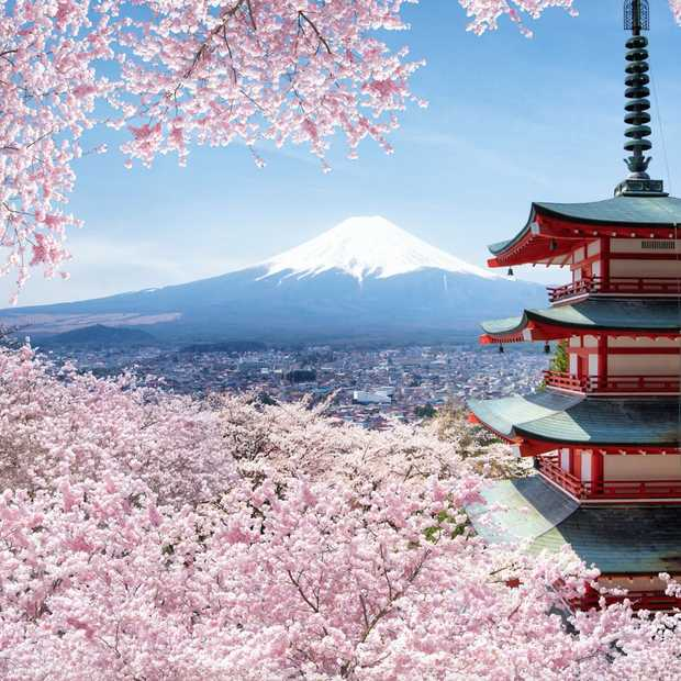 Het is lente: Japan kleurt weer roze