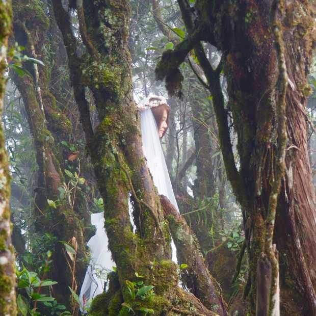 Betoverend mooi: het Mossy Forest in Maleisië