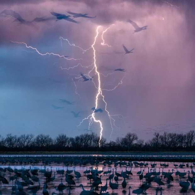 National Geographic kiest de 50 mooiste foto's van 2016