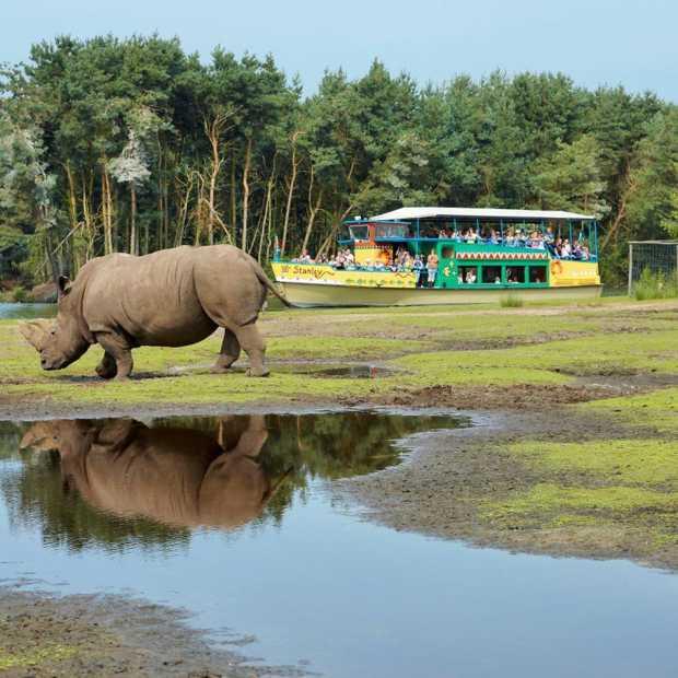De 'apenbolus' als hoogtepunt van een safariavontuur