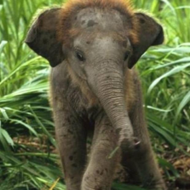 Stap van de olifant boekt succes na social media actie WSPA!