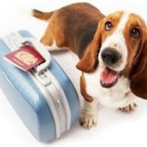 PetAirways: luchtvaartmaatschappij alleen voor dieren