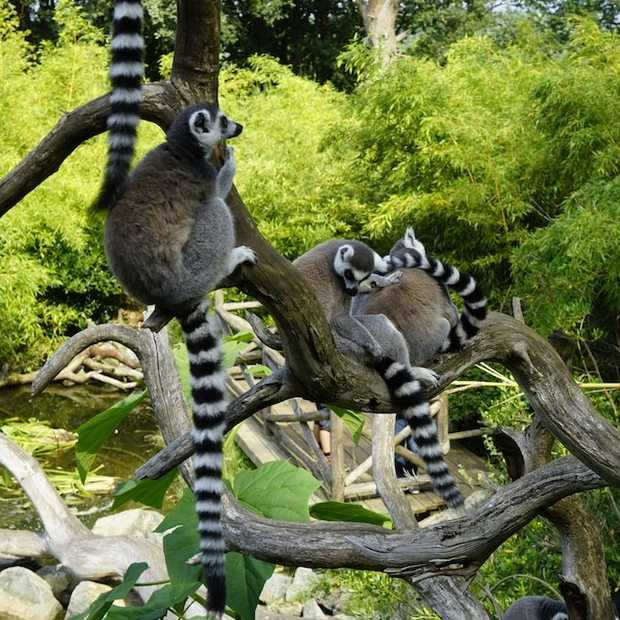 Zoo de La Flèche is één van Europa's mooiste dierentuinen