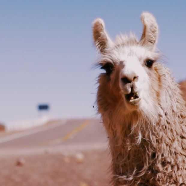 Meesterlijke video: te voet door Argentinië