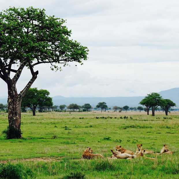 Op safari in Tanzania: Mikumi National Park