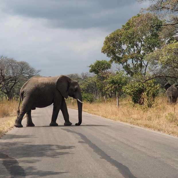 30 foto's die de schoonheid van het Krugerpark laten zien