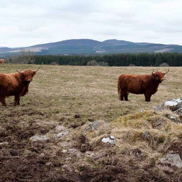 Schotland, paradijs voor natuurliefhebbers in 30 foto's