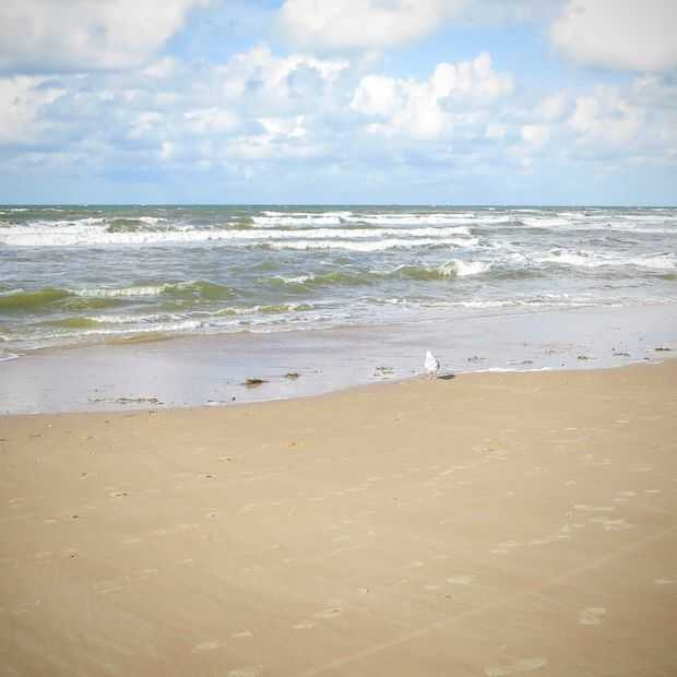 Strandcamping Groede toont het levend schilderij