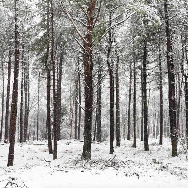 6 tips voor fotograferen in de sneeuw: zo doe je dat!