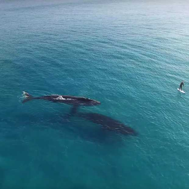 Bizar mooi: suppen tussen de walvissen in Australië