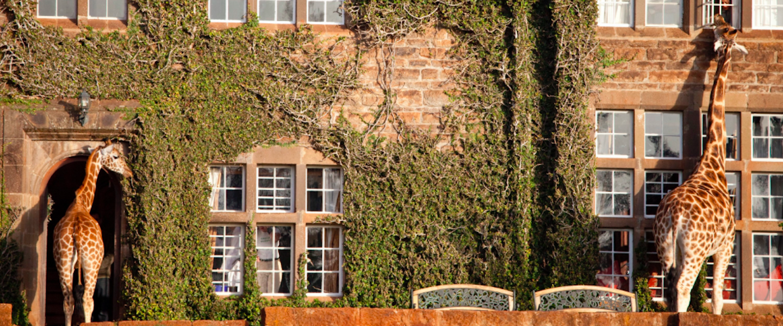 Het leukste hotel in Kenia: Giraffe Manor