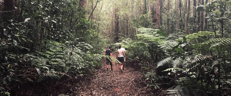 Boho-dorp Bellingen en hiken naar de Crystal Falls