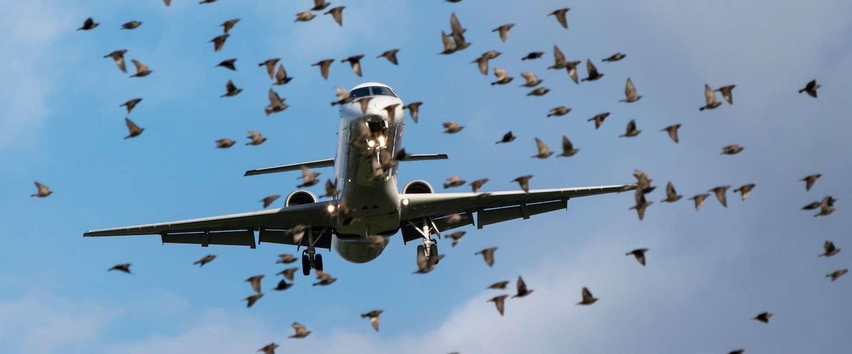Bird strike: wel of geen vergoeding voor vertraging van je vlucht?