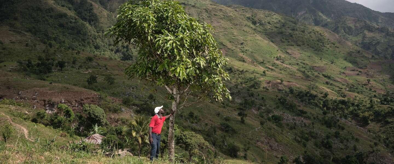 Plant een boom - of zelfs een heel bos - met Treedom