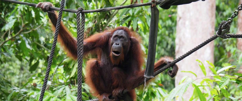 Het mooiste van Borneo: een reis door Sabah in 30 foto's